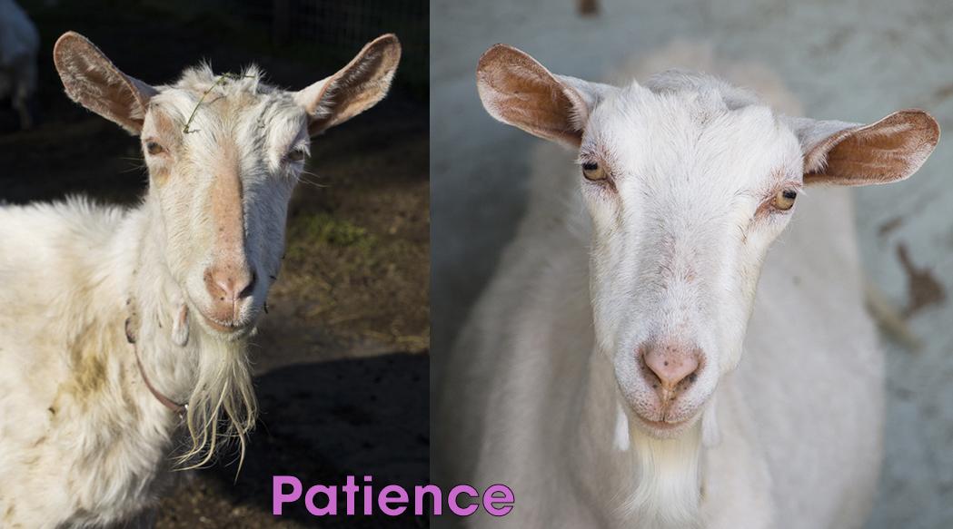 patience BA copy