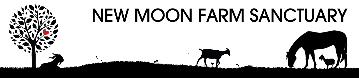 New Moon Farm – Goat Rescue & Sanctuary